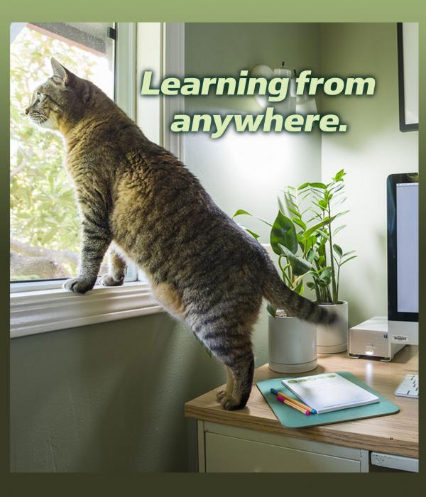 Learning from anywhere. [Cat standing on desk and looking out window]