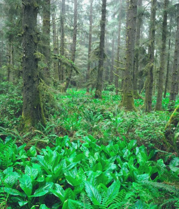 Skunk Cabbage Trail