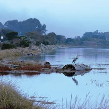 Highway 101 and Humboldt Bay with blue heron