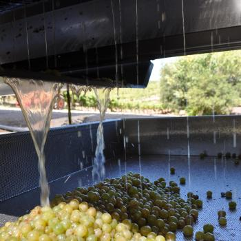 green grapes being pressed into juice