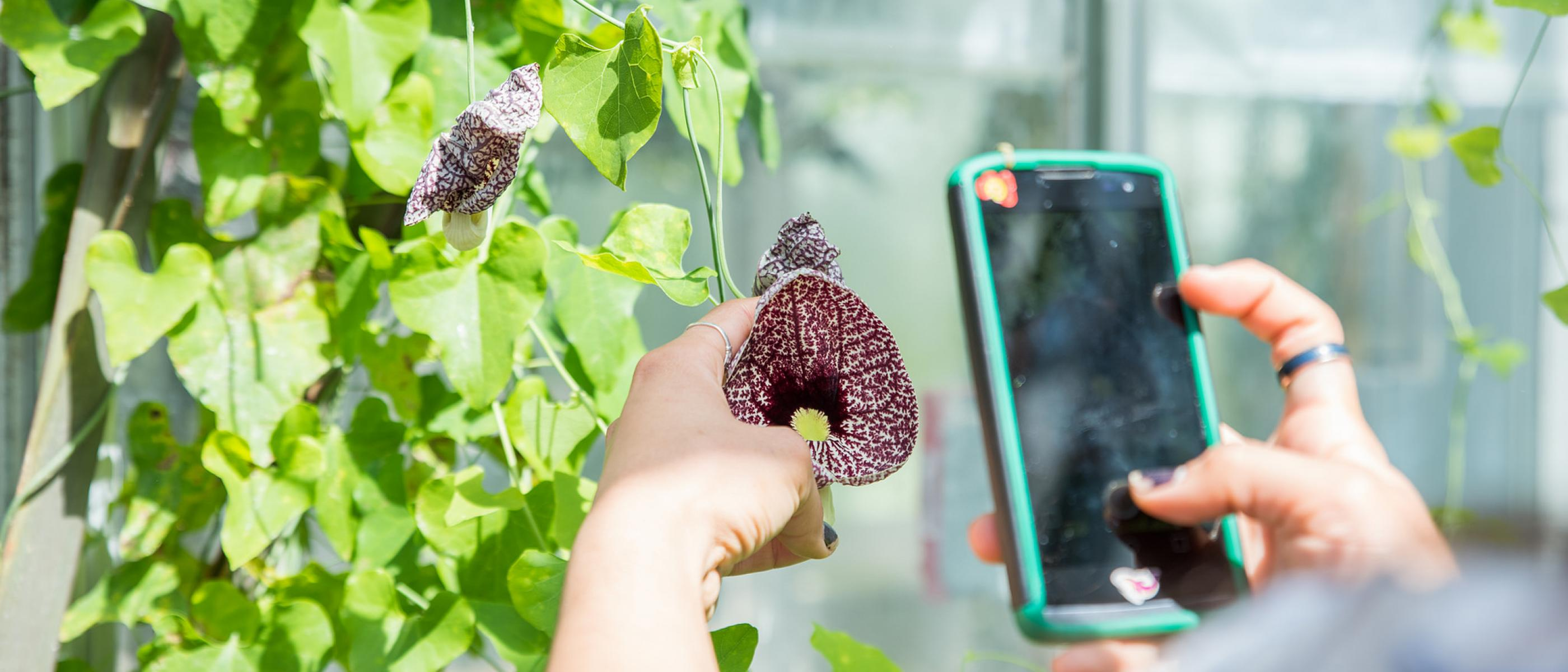 Student taking a picture of plants with mobile phone