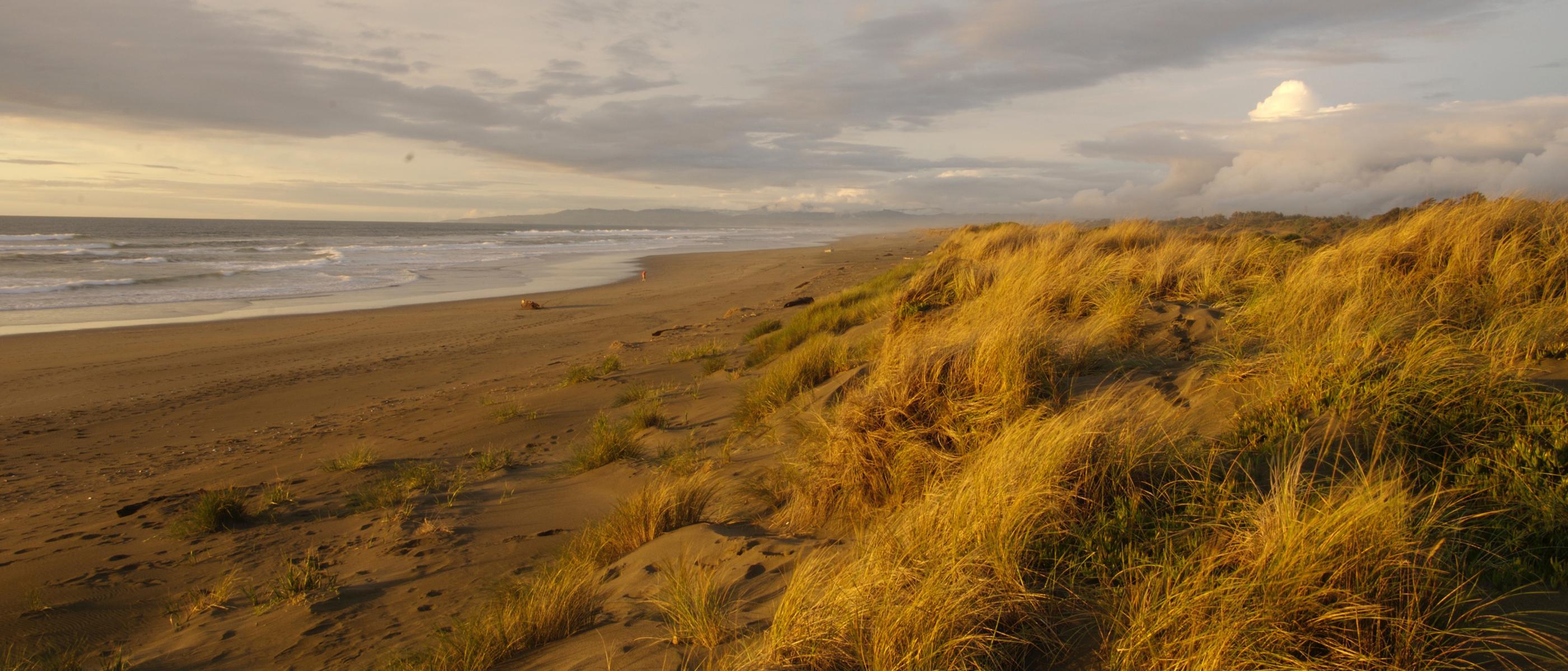 dunes and beach