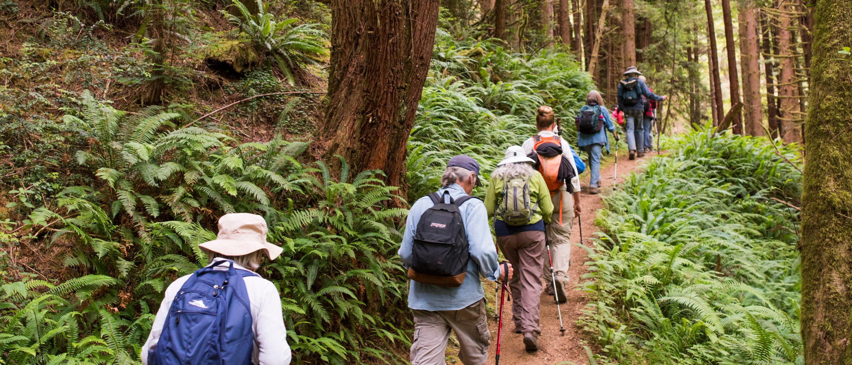 People hiking on forest trail
