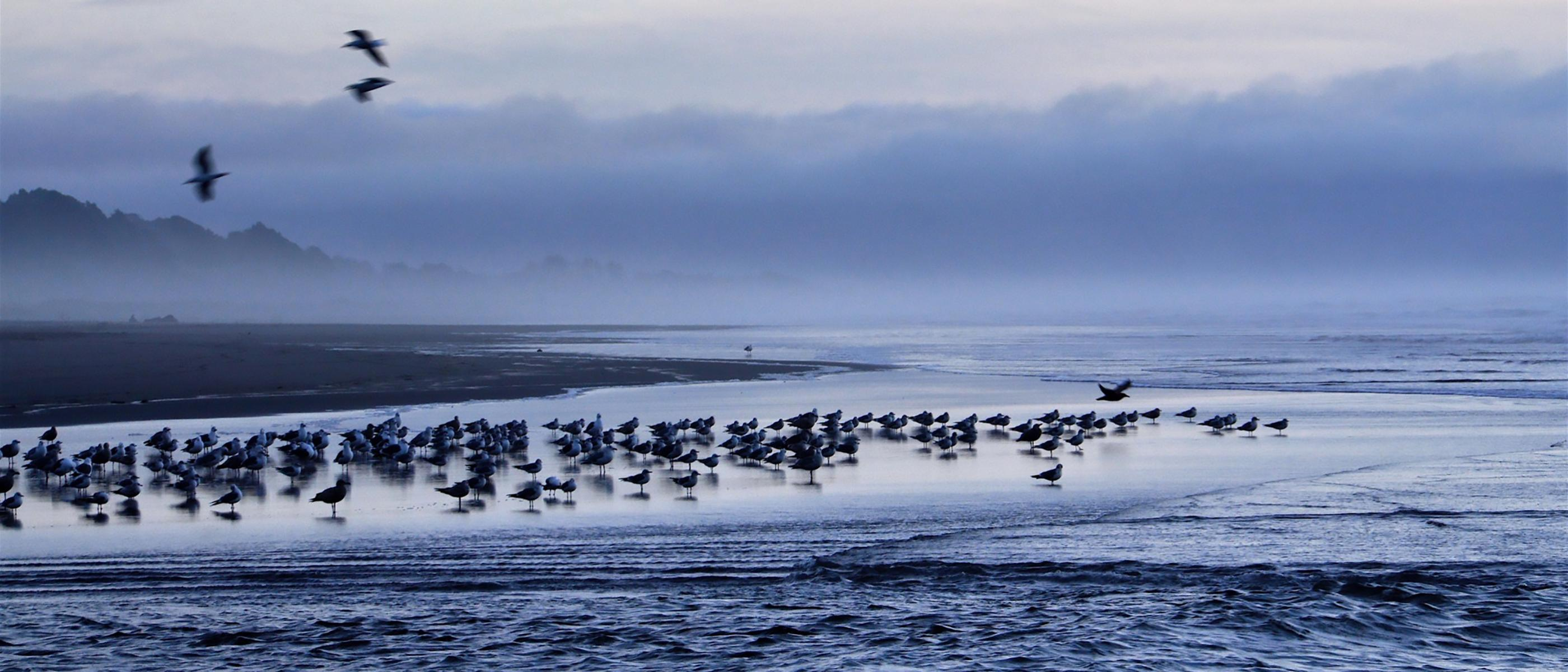 birds on twilight beach