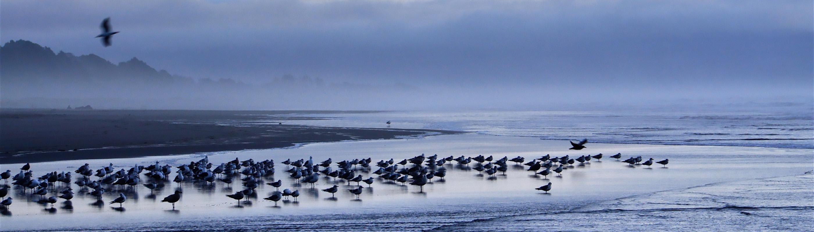 birds on twilight beach