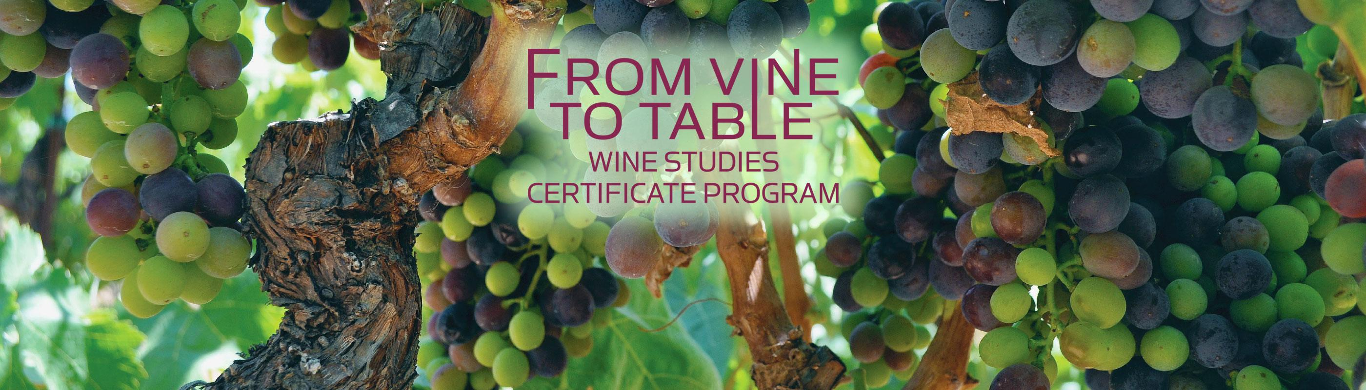 From Vine to Table Wine Studies Certificate Program
