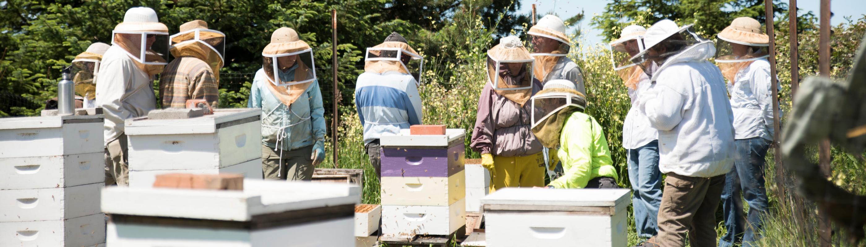beekeepers in beeyard