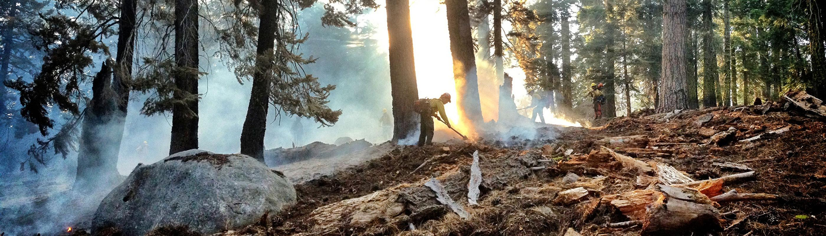 Firefighter working in forest