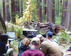 Film crew in redwood forest