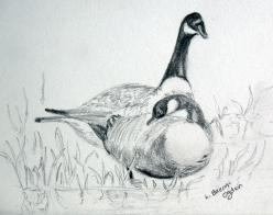 Drawing of a pair of geese