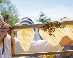 Beekeeper looking at honeycomb
